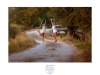 AngelaAna-verano-sesiones-exteriores-juan-almagro-fotografos-9